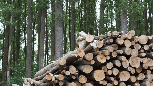 tutti i vantaggi e gli svantaggi delle centrali a biomasse