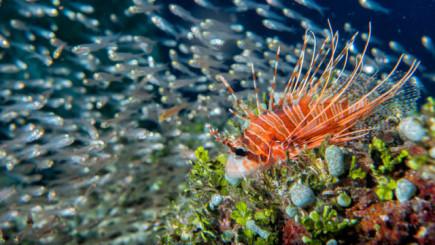 Animali strani e buffi pesce scorpione
