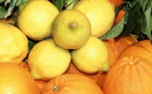 arance e limoni alimenti che è meglio comprare bio