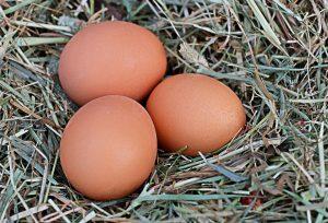 uova alimenti che è meglio comprare bio