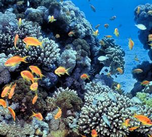 barriera corallina sottacqua mar rosso
