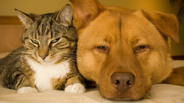 Cani e Gatti vivono più a lungo