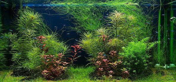 Allestire un acquario consigli per l 39 acquisto e la for Filtro vasca pesci rossi