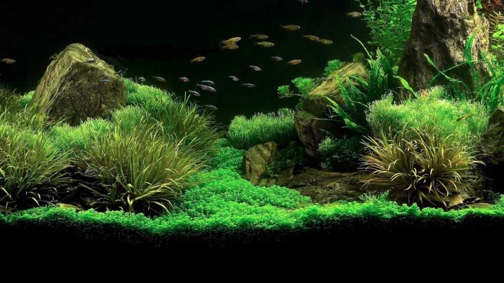Allestire un acquario consigli per l 39 acquisto e la for Acquario acqua dolce
