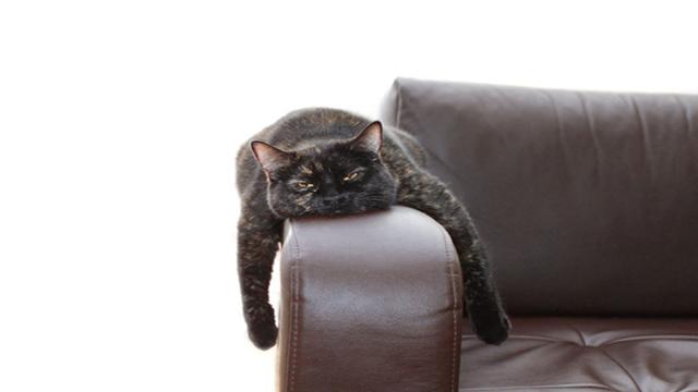 Sintomi e rimedi per un gatto stressato.