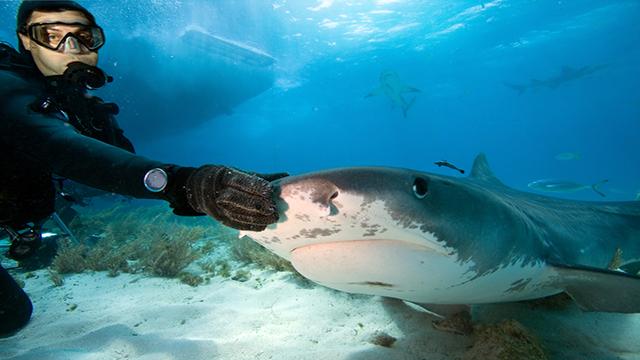Chi salverà lo squalo dall'uomo?