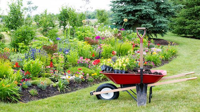 Aiuole con piante perenni mp93 pineglen for Vendita piante da giardino