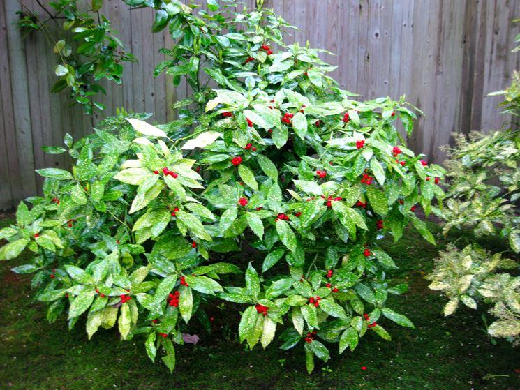 10 piante da giardino come scegliere quelle giuste - Alberi sempreverdi da giardino ...