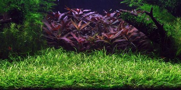 piante per acquario