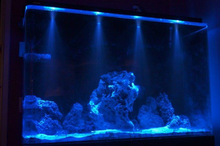 Allestire un acquario consigli per l 39 acquisto e la for Filtro vasca pesci