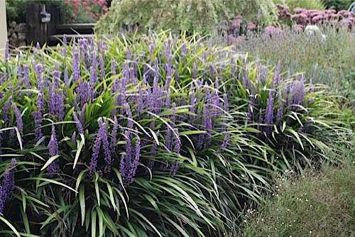 10 piante da giardino come scegliere quelle giuste for Piante da cespuglio