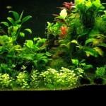 10 Piante facili per l'acquario d'acqua dolce