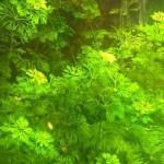 Come scegliere le piante per l'acquario