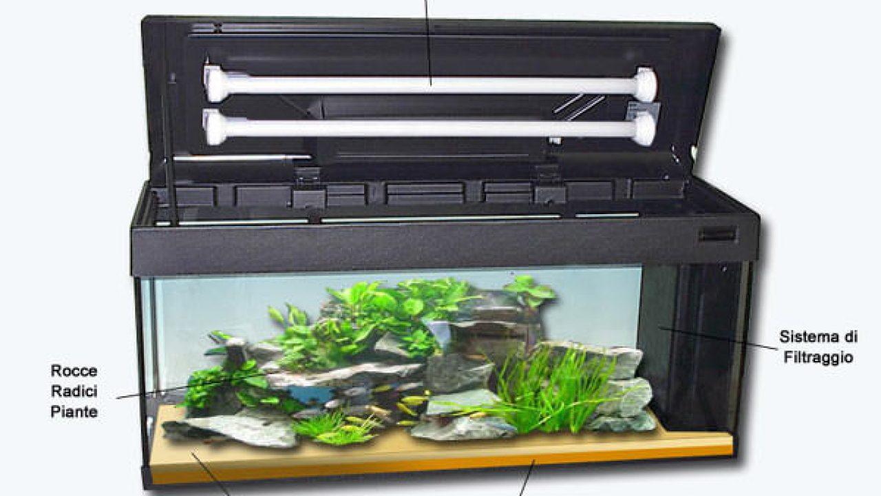 Piante Da Appartamento Per Acquario.Il Primo Acquario Guida Per Principianti