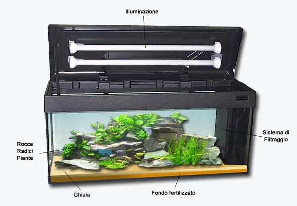 Il primo acquario guida per principianti for Filtro acquario fai da te