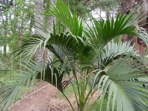 10 piante da interno come prendersene cura - Nomi di piante da giardino ...