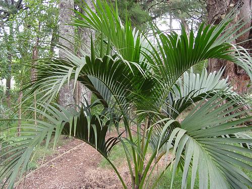 Kentia piante da interno come prendersene cura - Piante da tenere in casa ...