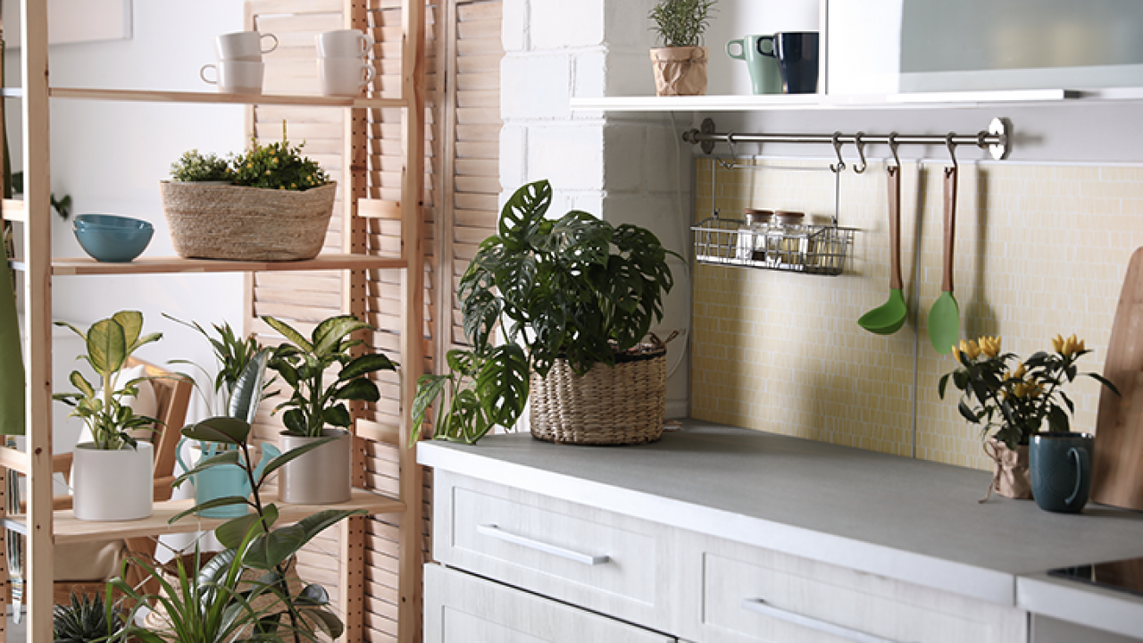 Piante Da Arredo Appartamento 10 piante da interno: come prendersene cura