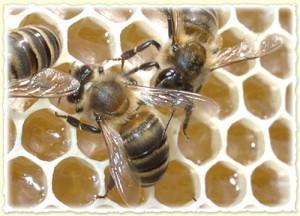 Come si produce il miele incontro a fa la cosa giusta