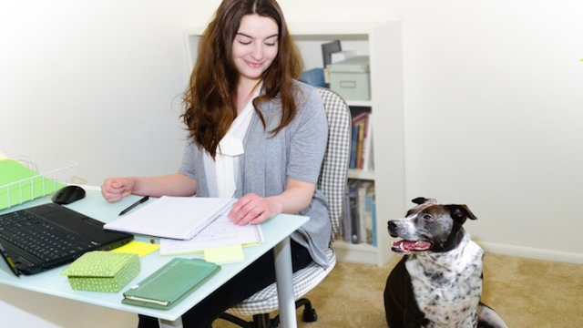 Cani in ufficio riducono lo stress