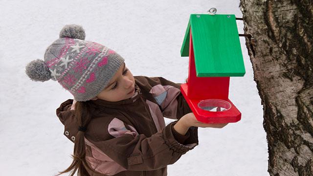 come costruire casette per uccelli in città