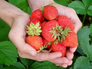frutta di stagione di aprile, le fragole