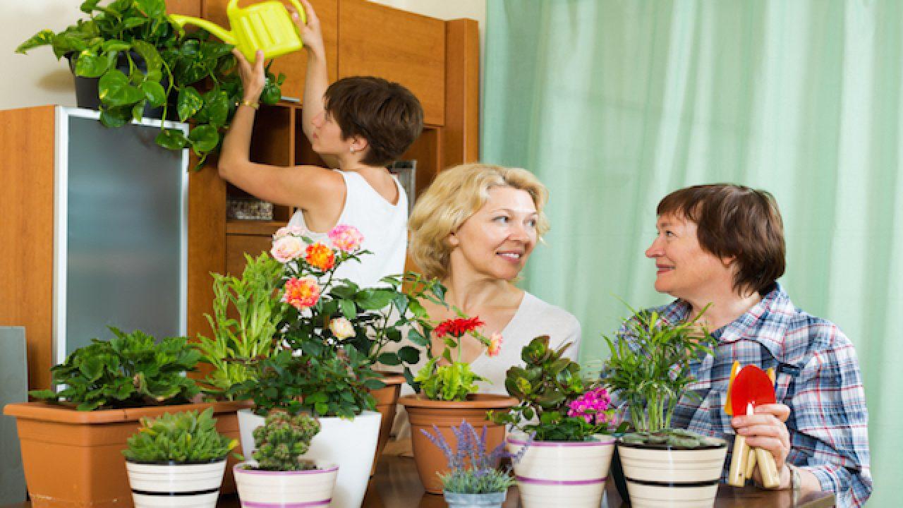 Piante Da Appartamento Come Curarle.10 Piante Da Interno Come Prendersene Cura