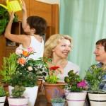10 piante da interno: come prendersene cura