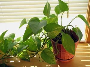 10 piante da interno come prendersene cura for Pianta dell appartamento da 300 piedi quadrati