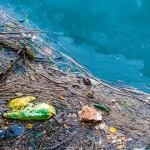 Seabin: una soluzione contro la spazzatura e l'inquinamento marino