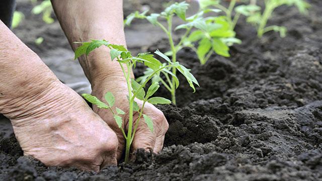 come coltivare un orto sinergico