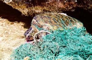 spazzatura e inquinamento marino causano morte animali