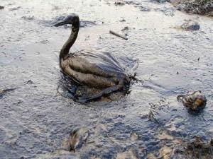 Petrolio e inquinamento marino causa danni agli alnimali