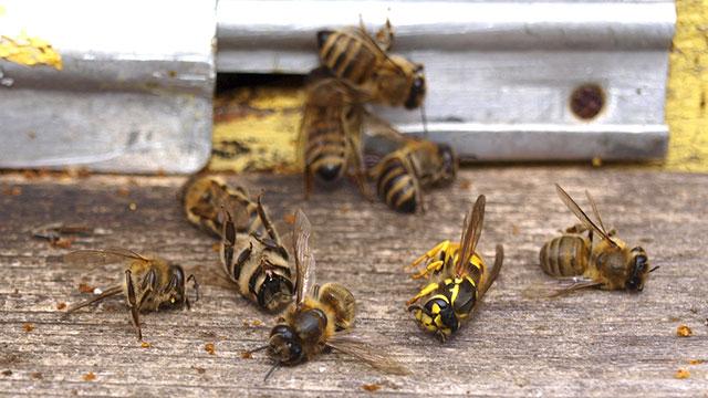 neonicotinoidi causano la morte delle api, nel Maryland una legge per vietarli