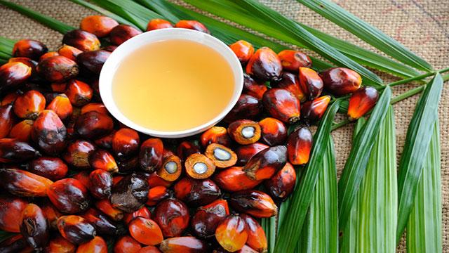olio di palma va consumato oppure no?