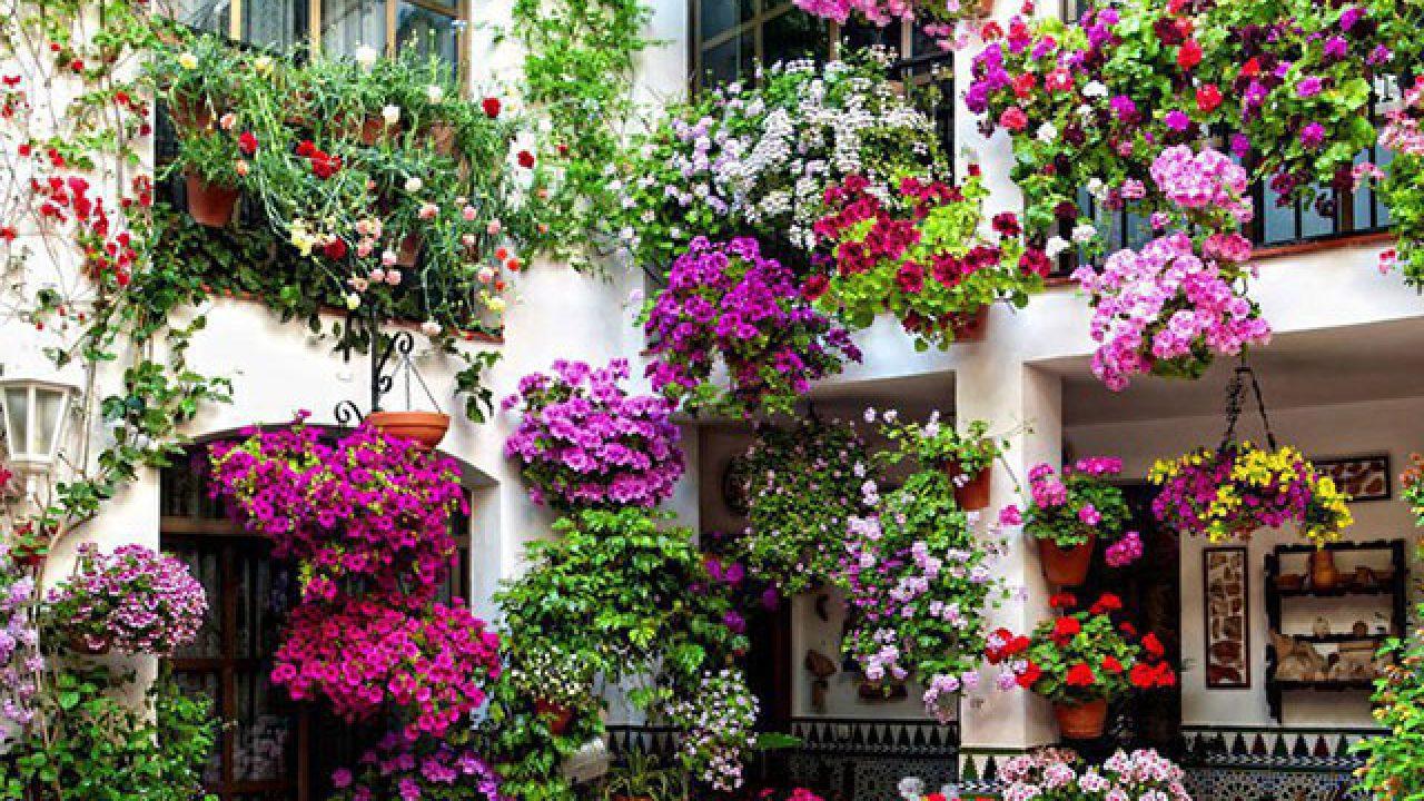Rampicanti Che Crescono All Ombra 10 fiori da balcone primaverili: come scegliere quelli giusti
