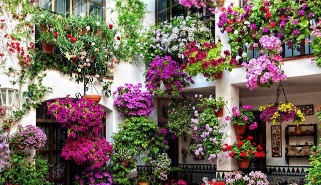 come scegliere i fiori primaverili da balcone