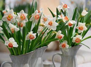 10 fiori primaverili da balcone, il narciso