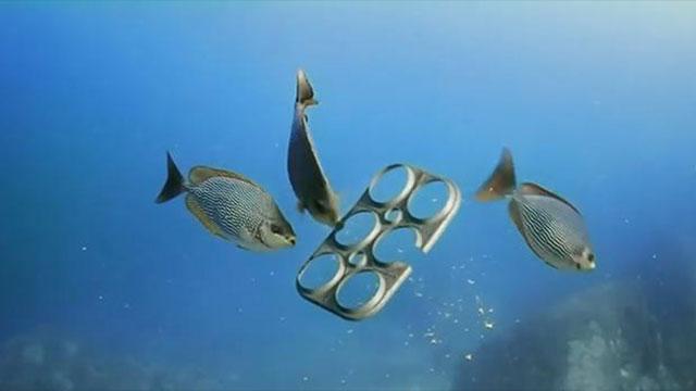 Dagli Usa Il Primo Six Pack Biodegradabile E Commestibile Per I Pesci