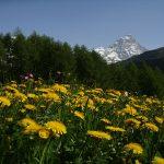 Le alpi occidentali: il luogo ideale per le tue vacanze in montagna