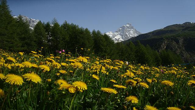 alpi occidentali il luogo ideale per le vacanze in montagna