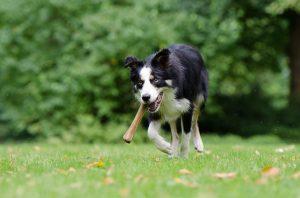 cibo per cani cane in salute