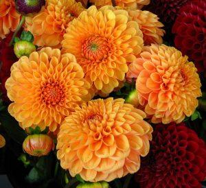 dalia fiori di matrimonio autunnali