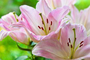 gigli fiori di matrimonio autunnali