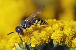 le api sono a rischio estinzione a causa degli insetticidi usati in agricoltura