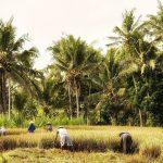 L'impatto ambientale dell'olio di palma