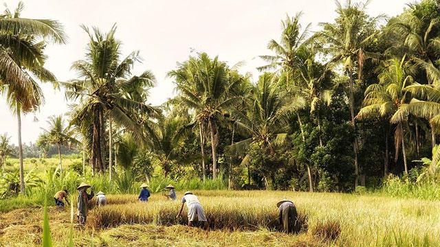 olio di palma e ambiente