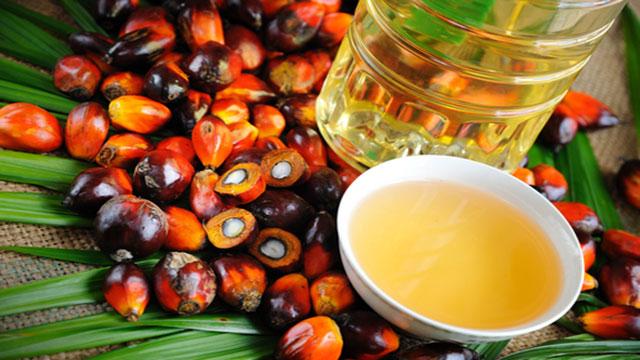 olio di palma e salute perché fa male