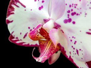 orchidea fiori di matrimonio invernali