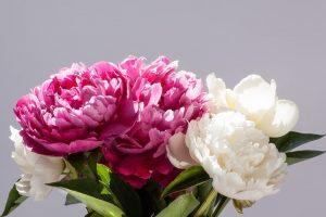 peonie fiori di matrimonio